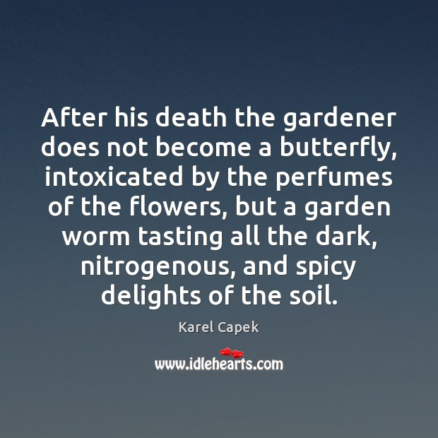 After his death the gardener does not become a butterfly, intoxicated by Karel Capek Picture Quote