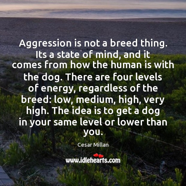 Aggression is not a breed thing. Its a state of mind, and Image