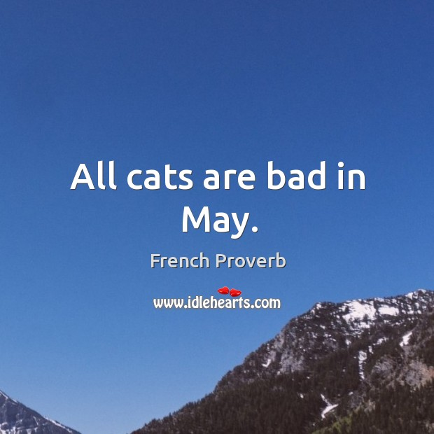 All cats are bad in may. French Proverbs Image