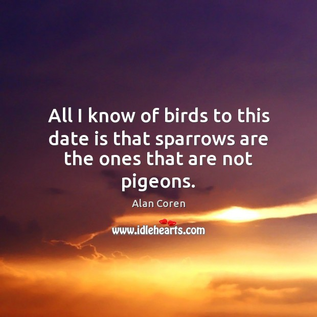 All I know of birds to this date is that sparrows are the ones that are not pigeons. Alan Coren Picture Quote