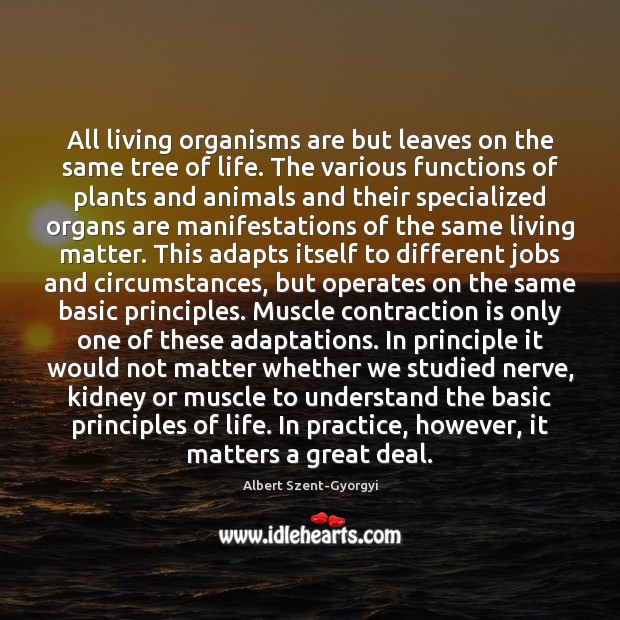 Image, All living organisms are but leaves on the same tree of life.