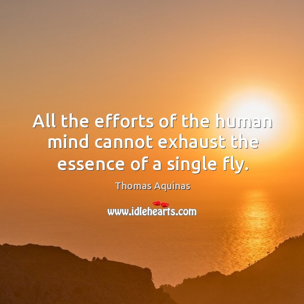 Image, All the efforts of the human mind cannot exhaust the essence of a single fly.