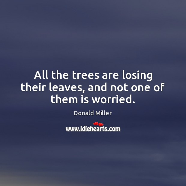 All the trees are losing their leaves, and not one of them is worried. Image