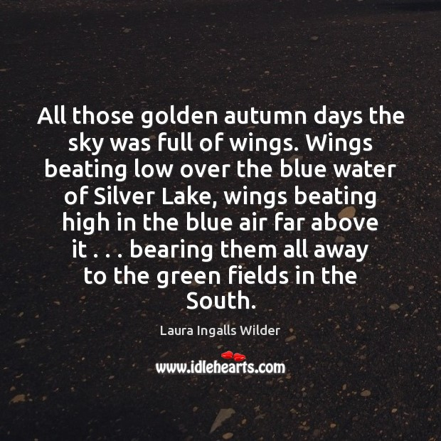 All those golden autumn days the sky was full of wings. Wings Image
