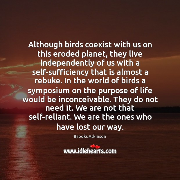 Although birds coexist with us on this eroded planet, they live independently Image