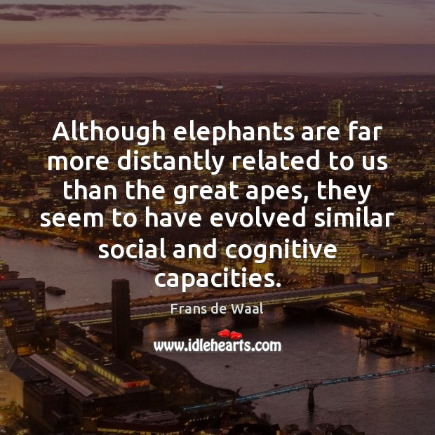 Although elephants are far more distantly related to us than the great Image