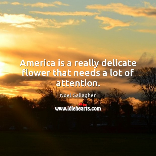 America is a really delicate flower that needs a lot of attention. Noel Gallagher Picture Quote
