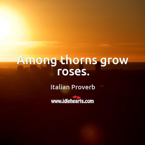 Image, Among thorns grow roses.
