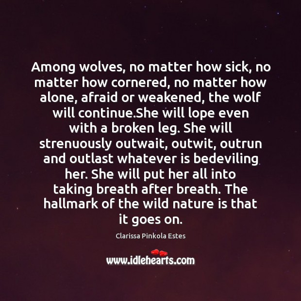Image, Among wolves, no matter how sick, no matter how cornered, no matter