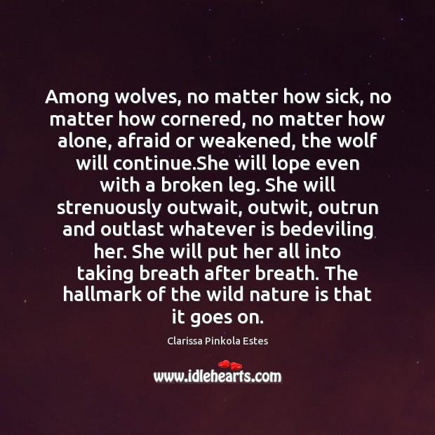 Among wolves, no matter how sick, no matter how cornered, no matter Clarissa Pinkola Estes Picture Quote
