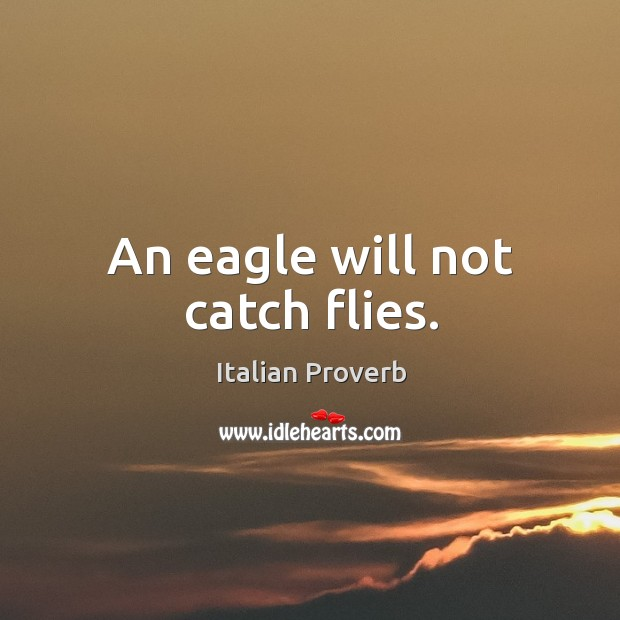 Image, An eagle will not catch flies.