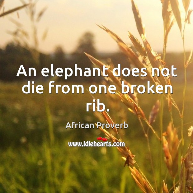 Image, An elephant does not die from one broken rib.