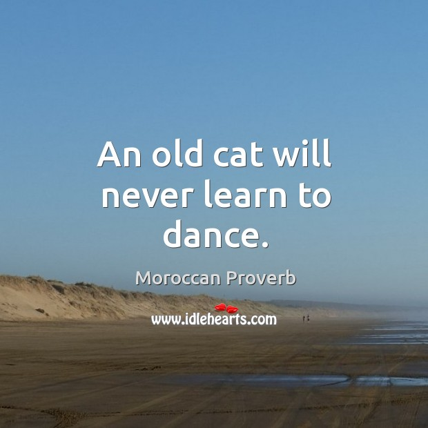 An old cat will never learn to dance. Moroccan Proverbs Image