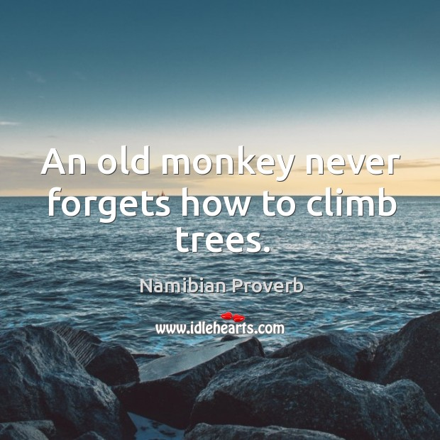 An old monkey never forgets how to climb trees. Namibian Proverbs Image