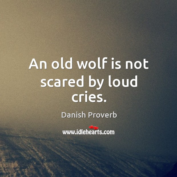 Image, An old wolf is not scared by loud cries.