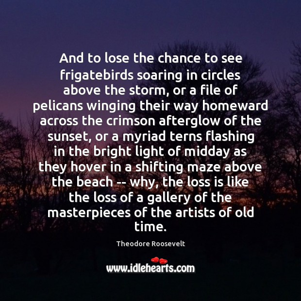 Image, And to lose the chance to see frigatebirds soaring in circles above
