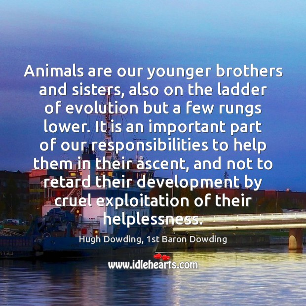 Image, Animals are our younger brothers and sisters, also on the ladder of