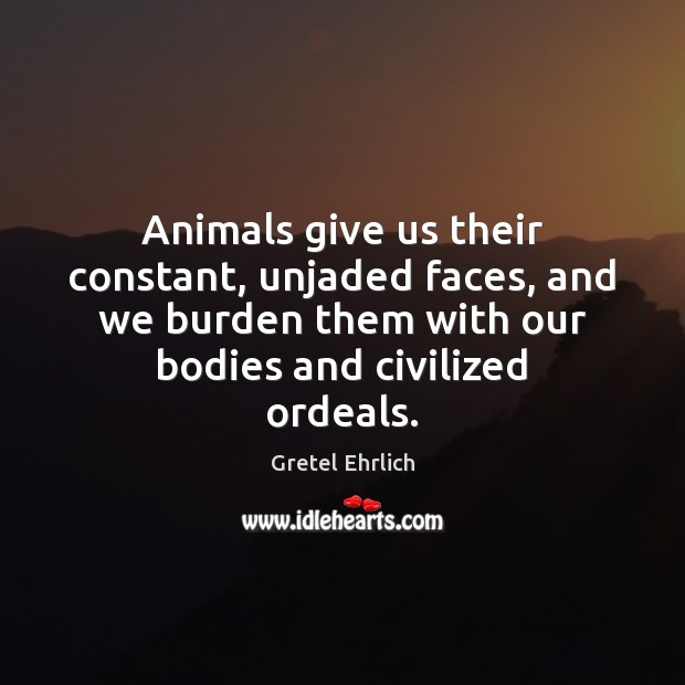 Animals give us their constant, unjaded faces, and we burden them with Gretel Ehrlich Picture Quote