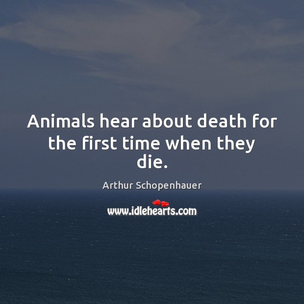 Animals hear about death for the first time when they die. Image
