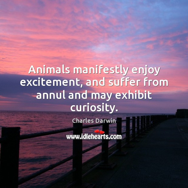 Animals manifestly enjoy excitement, and suffer from annul and may exhibit curiosity. Image