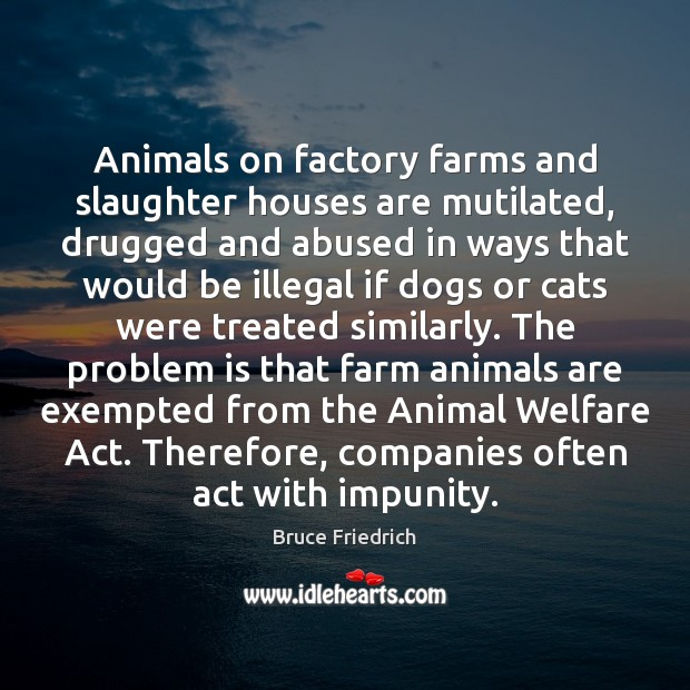 Image, Animals on factory farms and slaughter houses are mutilated, drugged and abused