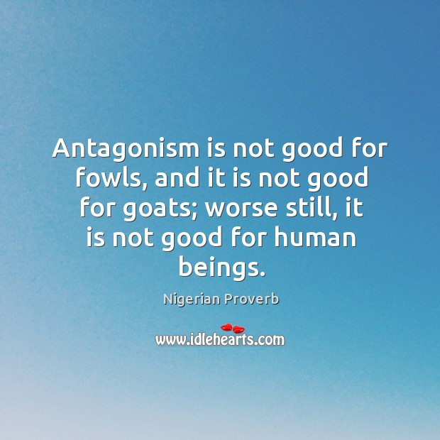 Image, Antagonism is not good for fowls, and it is not good for goats