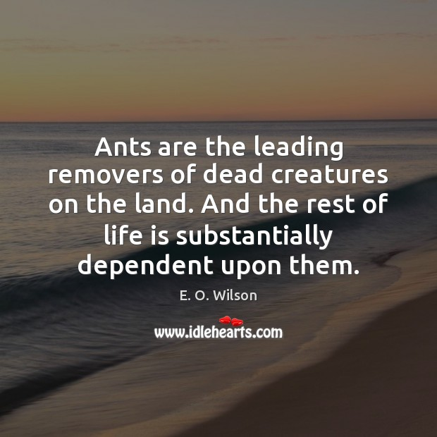 Ants are the leading removers of dead creatures on the land. And E. O. Wilson Picture Quote