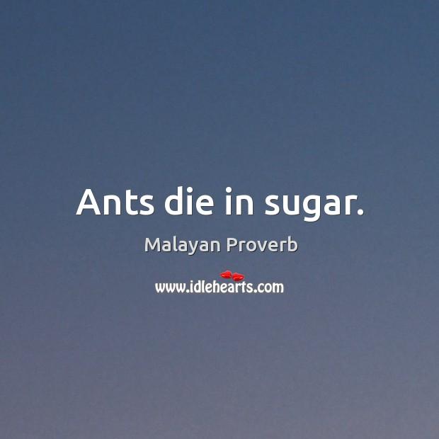 Ants die in sugar. Malayan Proverbs Image