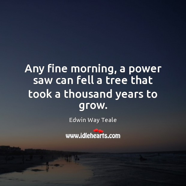 Any fine morning, a power saw can fell a tree that took a thousand years to grow. Edwin Way Teale Picture Quote