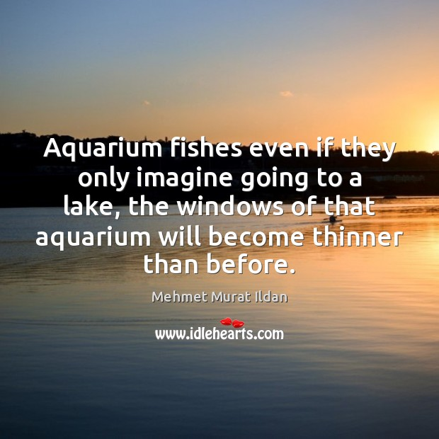 Image, Aquarium fishes even if they only imagine going to a lake, the