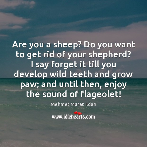 Are you a sheep? Do you want to get rid of your Image