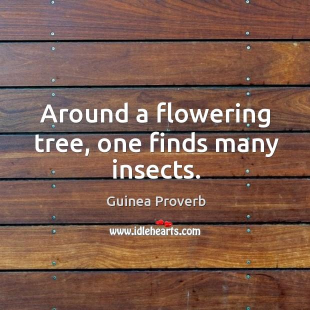 Guinea Proverbs
