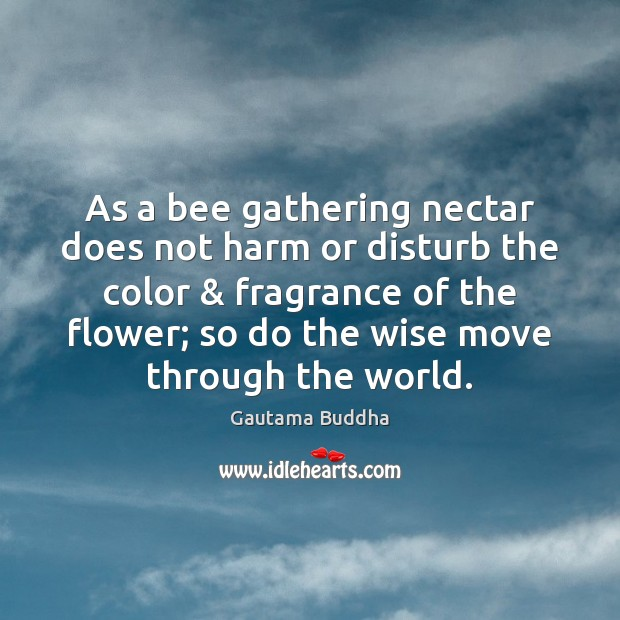 As a bee gathering nectar does not harm or disturb the color & Image