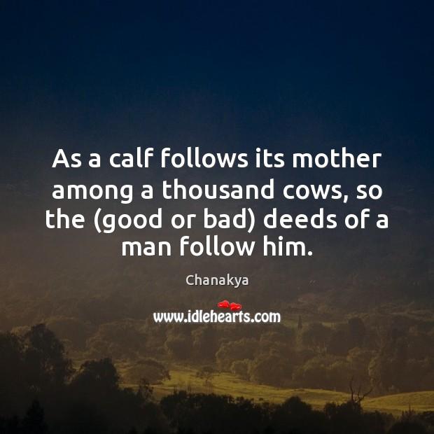 Image, As a calf follows its mother among a thousand cows, so the (