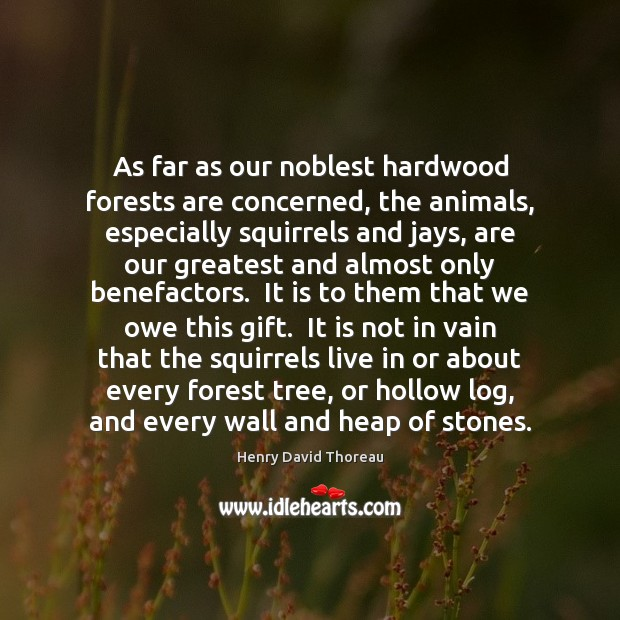 Image, As far as our noblest hardwood forests are concerned, the animals, especially