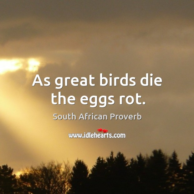 As great birds die the eggs rot. South African Proverbs Image