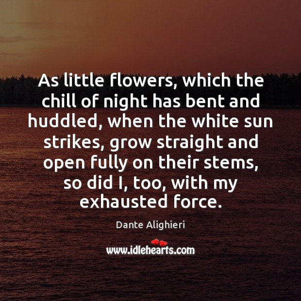 As little flowers, which the chill of night has bent and huddled, Image
