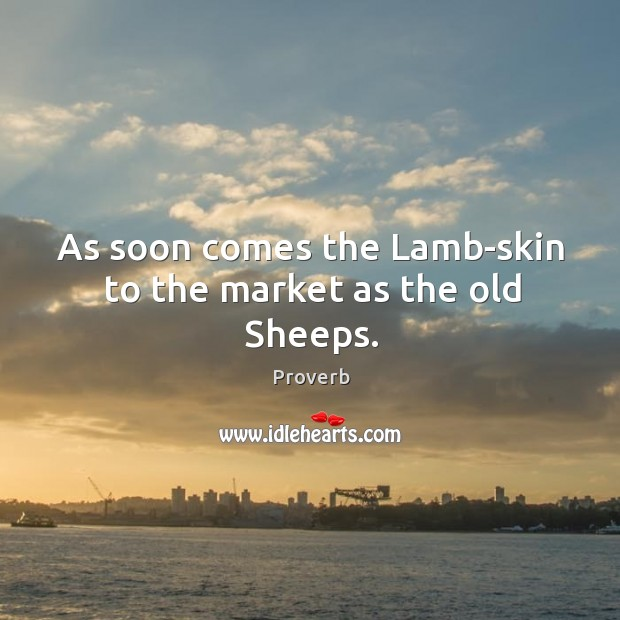 Image, As soon comes the lamb-skin to the market as the old sheeps.
