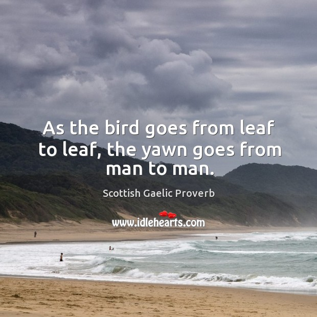 As the bird goes from leaf to leaf, the yawn goes from man to man. Scottish Gaelic Proverbs Image