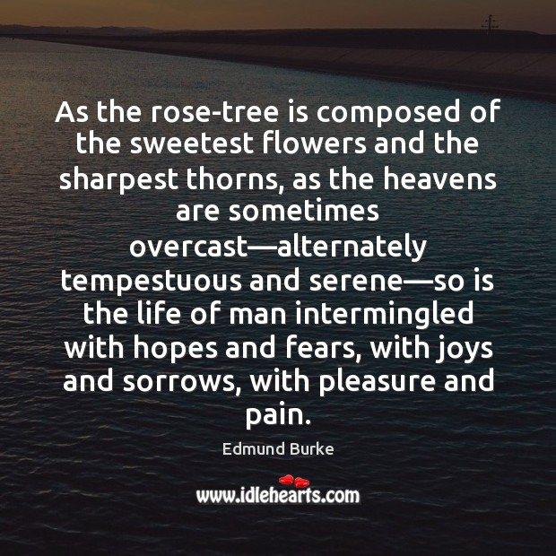 As the rose-tree is composed of the sweetest flowers and the sharpest Edmund Burke Picture Quote