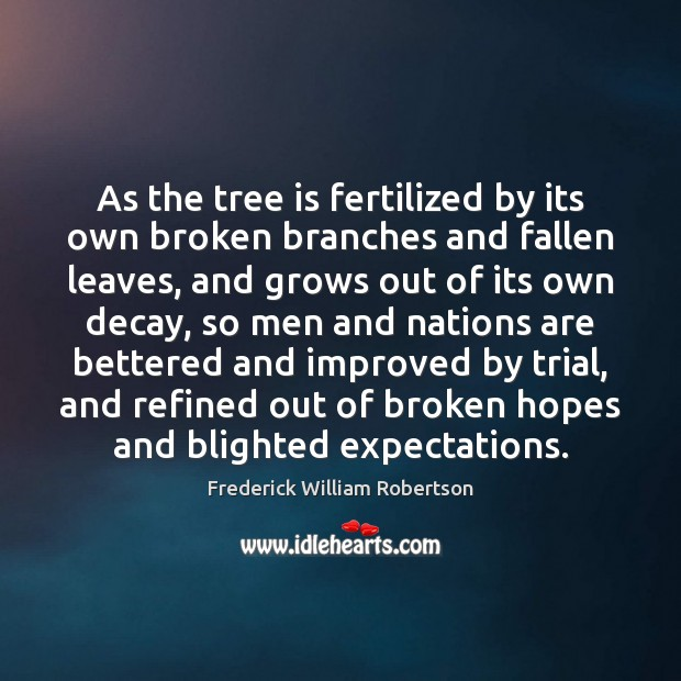 Image, As the tree is fertilized by its own broken branches and fallen