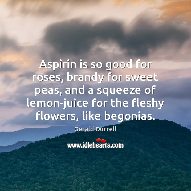 Aspirin is so good for roses, brandy for sweet peas, and a Image