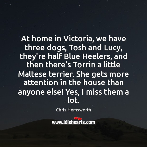 At home in Victoria, we have three dogs, Tosh and Lucy, they're Chris Hemsworth Picture Quote