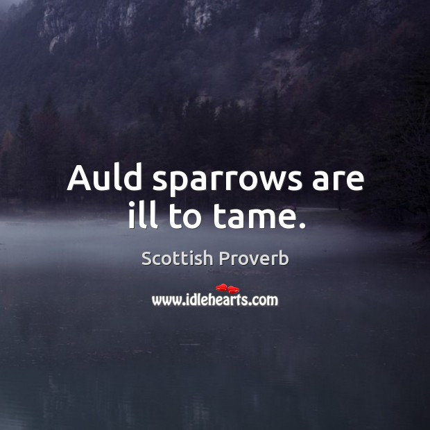 Auld sparrows are ill to tame. Scottish Proverbs Image