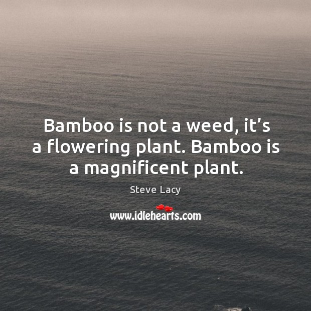 Bamboo is not a weed, it's a flowering plant. Bamboo is a magnificent plant. Image