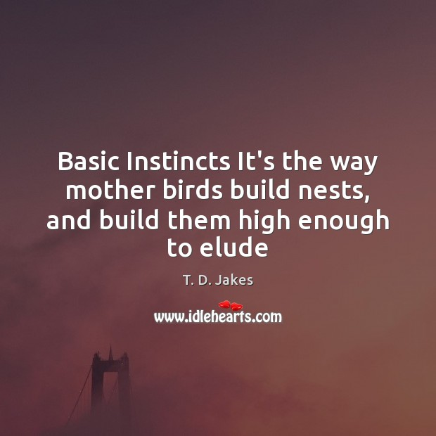 Image, Basic Instincts It's the way mother birds build nests, and build them high enough to elude