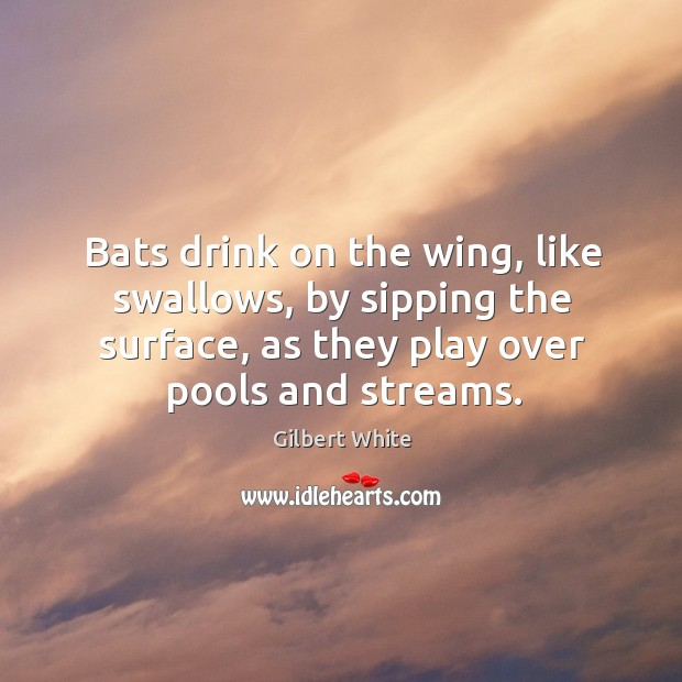 Bats drink on the wing, like swallows, by sipping the surface, as they play over pools and streams. Image