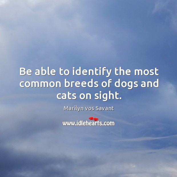 Be able to identify the most common breeds of dogs and cats on sight. Image