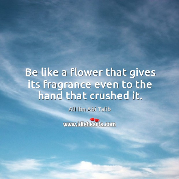 Be like a flower that gives its fragrance even to the hand that crushed it. Ali Ibn Abi Talib Picture Quote