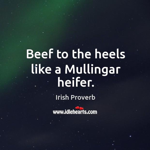Beef to the heels like a mullingar heifer. Irish Proverbs Image